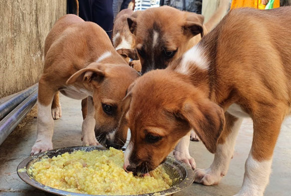 Committee Reports: Animal Welfare 2019-2020 – Rotary Club of Bombay